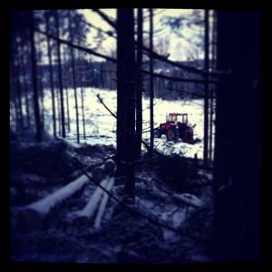 skogshugg